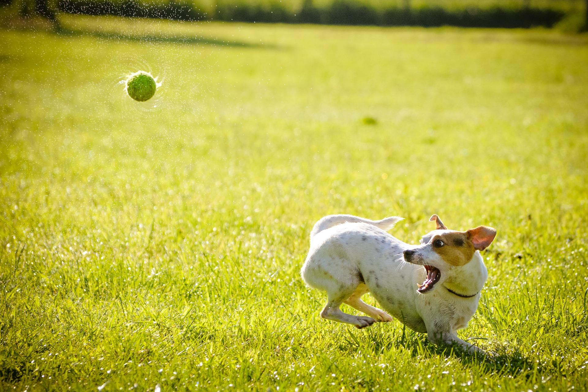 rencontre passion chien